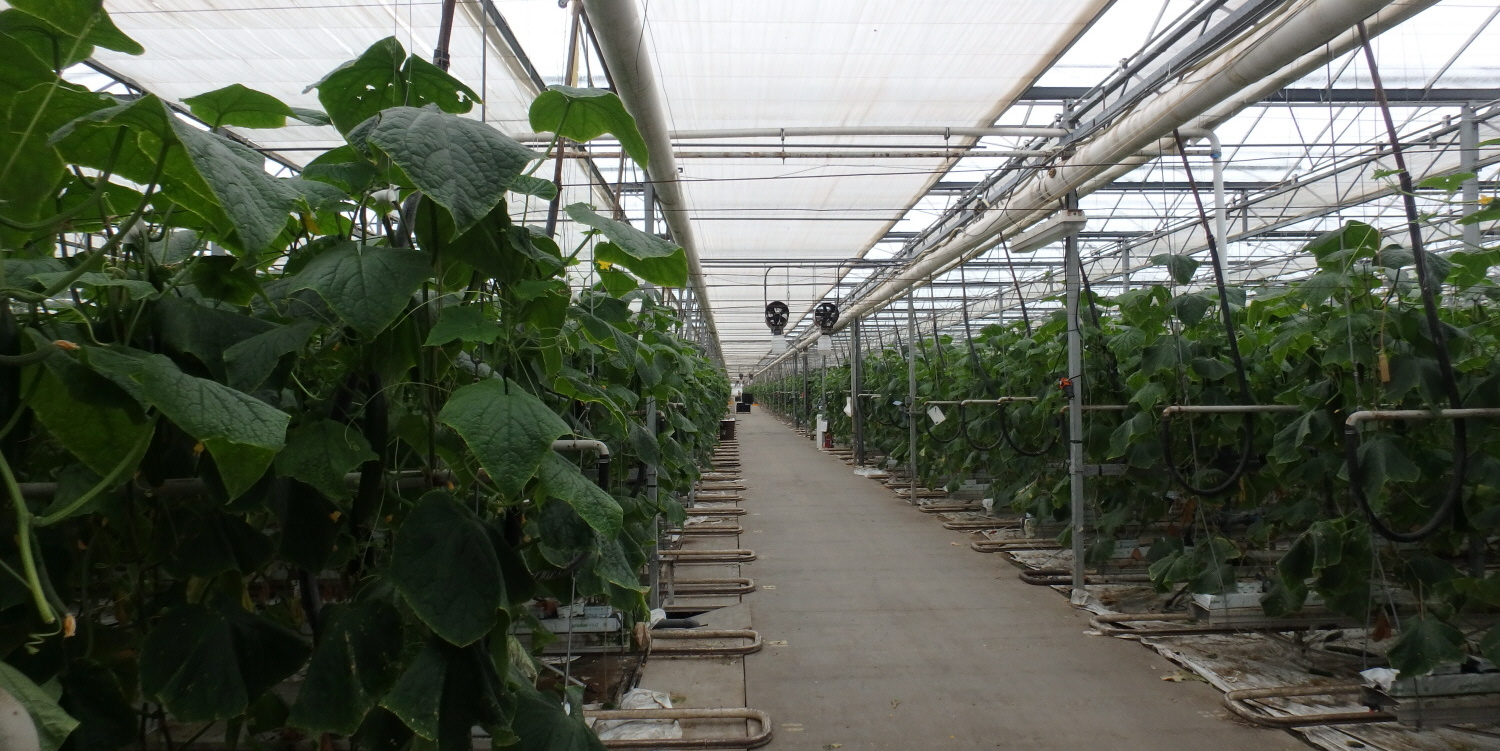 10 Greenhouse for Lease